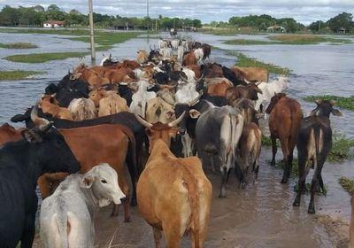 Sector de la ganadería registra una baja en exportaciones a raíz de las inundaciones