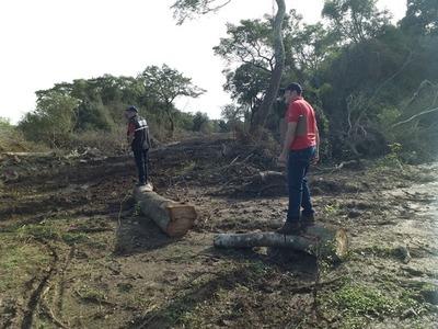 Intervienen inmobiliaria por la eliminación de árboles nativos