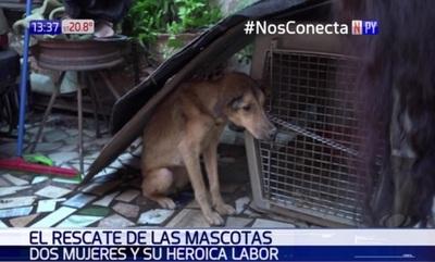 """""""Hago lo que nadie hace"""": Rescata a mascotas de la crecida"""