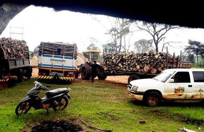En Choré, denuncian que hay una tala masiva de árboles