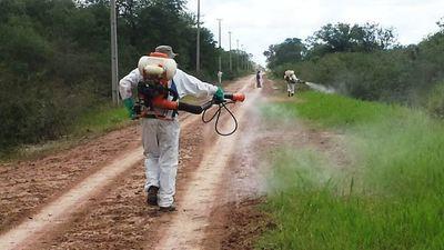 Senave detecta langostas que podrían poner en peligro cultivos en el Chaco