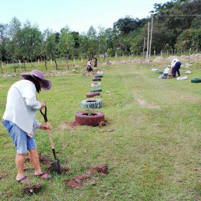 Instan a plantar árboles en su día