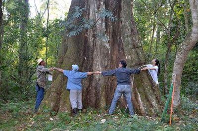 """""""Colosos de la Tierra"""" logra cifra récord con 559 árboles inscriptos"""