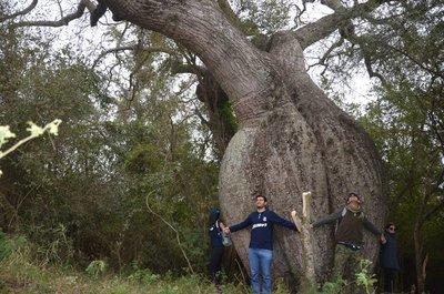 """""""Colosos de la Tierra"""": Chaco postula más de 8 especies de árboles"""