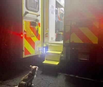 Amigo fiel: perrito espera a su dueño en la puerta de la ambulancia
