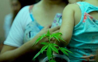 Madres podrían acceder al aceite de cannabis bajo control del Ministerio de Salud