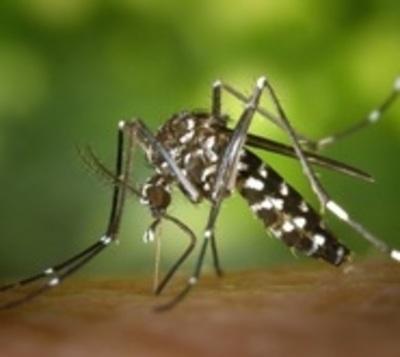 Ministerio de Salud reporta 18 por ciento menos casos de dengue