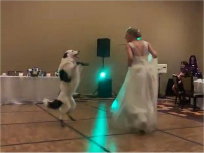 Video de una novia bailando en su boda con su perro se hace viral