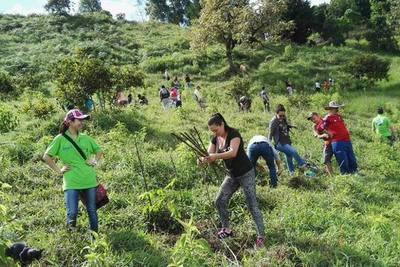 Plantatón: más de 1.000 árboles para reforestar Paraguarí