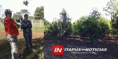 EDELIRA: ACOMPAÑAMIENTO DE AUTORIDADES A PRODUCTORES DE YERBA MATE.