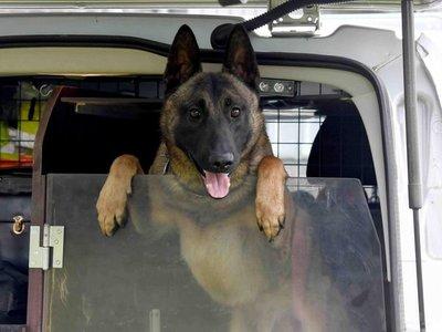 Cachorro que había sido abandonado se convierte en perro policía