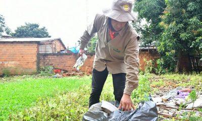 Siguen con intensas tareas contra el dengue