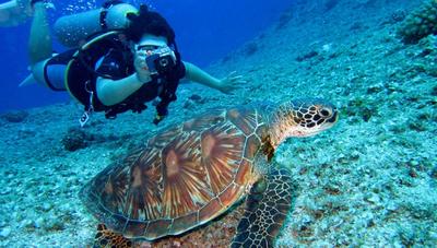 Las 5 experiencias más buscadas por los turistas del mundo, según Tripadvisor