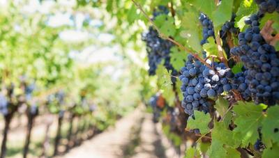 Argentina quiere fortalecer su oferta vinícola en Paraguay (movió más de US$ 17 millones el año pasado)