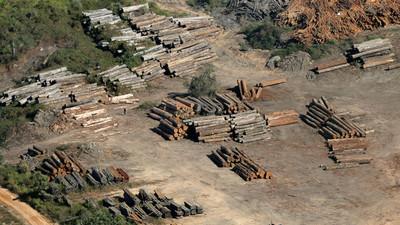 Deforestación en Amazonía brasileña llega al 88%