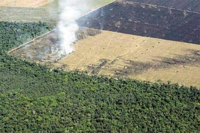 """Senadores rechazan proyecto ley de """"deforestación cero"""""""