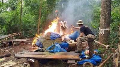 Senad destruyó 28 toneladas de marihuana en Amambay