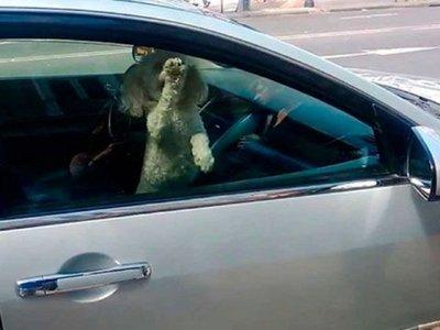 A abuelos y animales también se los deja encerrados en autos