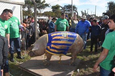 """""""El Chanchón"""" de 412.6 kg es el gran campeón del festival """"Kure Luque ára"""""""
