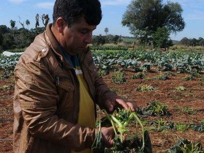 Heladas causan estragos en cultivos frutihortícolas en el  Alto Paraná
