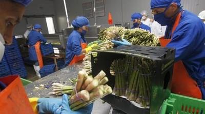 Latinoamérica ampliará exportación alimenticia