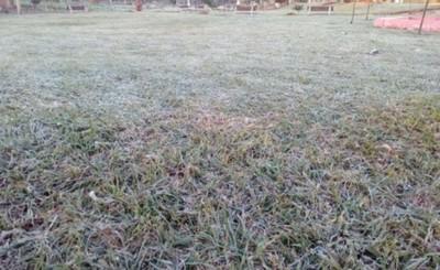 Productores perdieron el 50% de cultivos durante helada