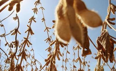 EE.UU. recortó su cosecha de soja en más de 8 millones de toneladas