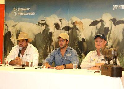 Paraguay mostrará lo mejor de su genética Brahman al mundo