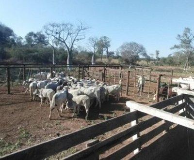 Crimen en el Chaco: Hallan tercer camión con ganado vacuno robado