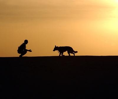 Aseguran que perder a una mascota, es igual a perder a un familiar humano