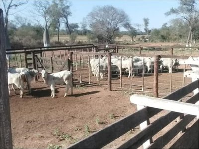 Totalizan 128 animales recuperados de los abuelos asesinados