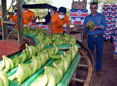 Lanzaron el Programa Nacional del Banano
