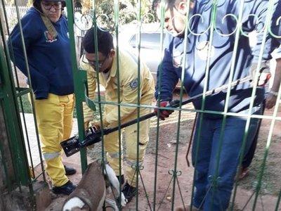 Perrito atorado en el portón movilizó a los bomberos