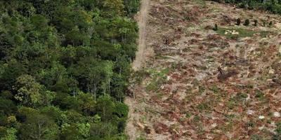 Deforestación del Amazonas creció 88 %, pero Bolsonaro no cree