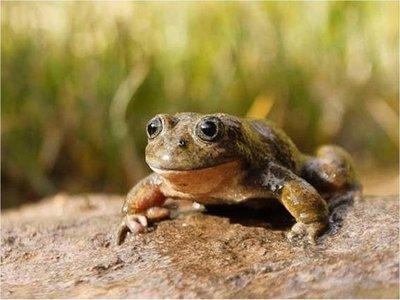 Científicos descubren dos nuevos tipos de ranas