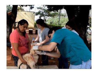 Veterinario desparasitó gratis a perritos por una promesa