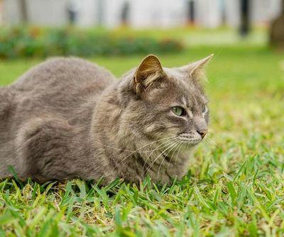 Más de un centenar de gatos en parque central de Lima