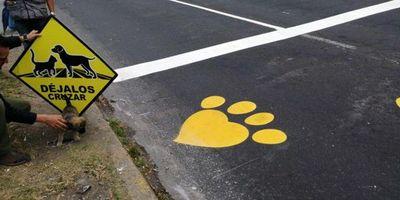 Quito marca sus carreteras con huellas de perro para salvar la fauna urbana