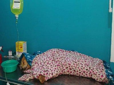 Ñemby: Rescatan a perro con hipotermia y heridas