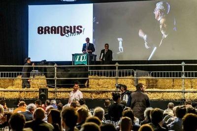 En la Expo Palermo de Buenos Aires tienen la expectativa de lograr buenas ventas de reproductores