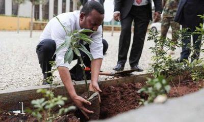 Etiopía planta 350 millones de árboles en un día