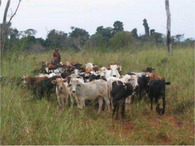 Agroganaderos brasileños invaden las tierras de la franja de Itaipú