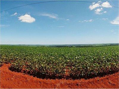 Deforestación: Itaipú pidió  prestado  USD 11,5 millones
