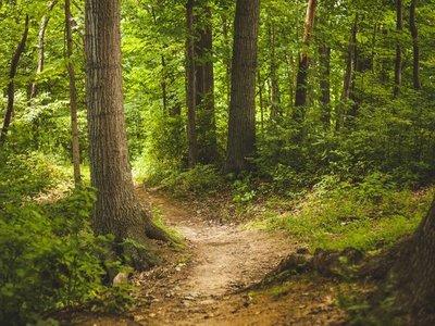 Bosques son fundamentales para frenar el cambio climático