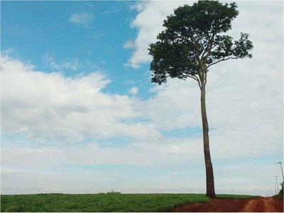 Itaipú no respetó ley  y dejó a empresarios 50 mil hectáreas