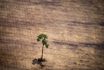 Brasil, un gigante agrícola que tropieza con la protección ambiental