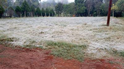 Escarchas del fin de semana afectaron trigo y pasturas