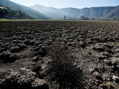 Hay que cambiar la dieta para parar el cambio climático, advierte ONU