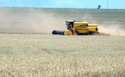 Productores del Alto Paraná, preocupados por el impacto de las heladas en el trigo