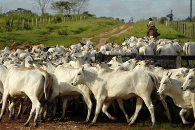 Trazabilidad permitirá tener mayor control de ganados